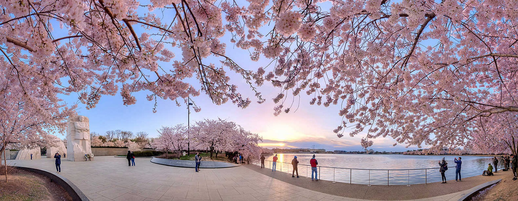 park with cherry blossoms