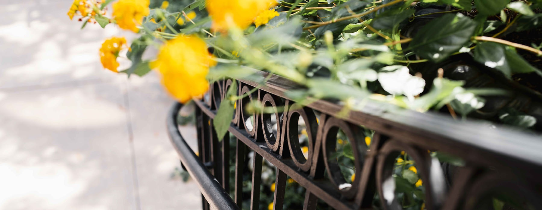 outdoor staircase railing with orange flowers growing alongside and over it